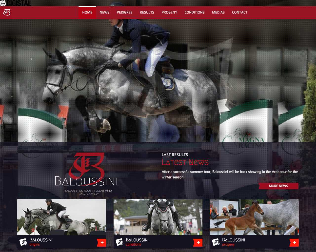 Alawal stud-Baloussini Stallion un site Dreamclic